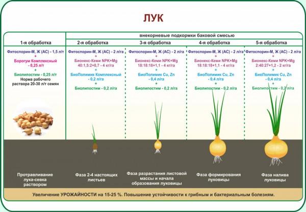 Лук-севок: когда убирают урожай, как правильно выкапывать и готовить к хранению?