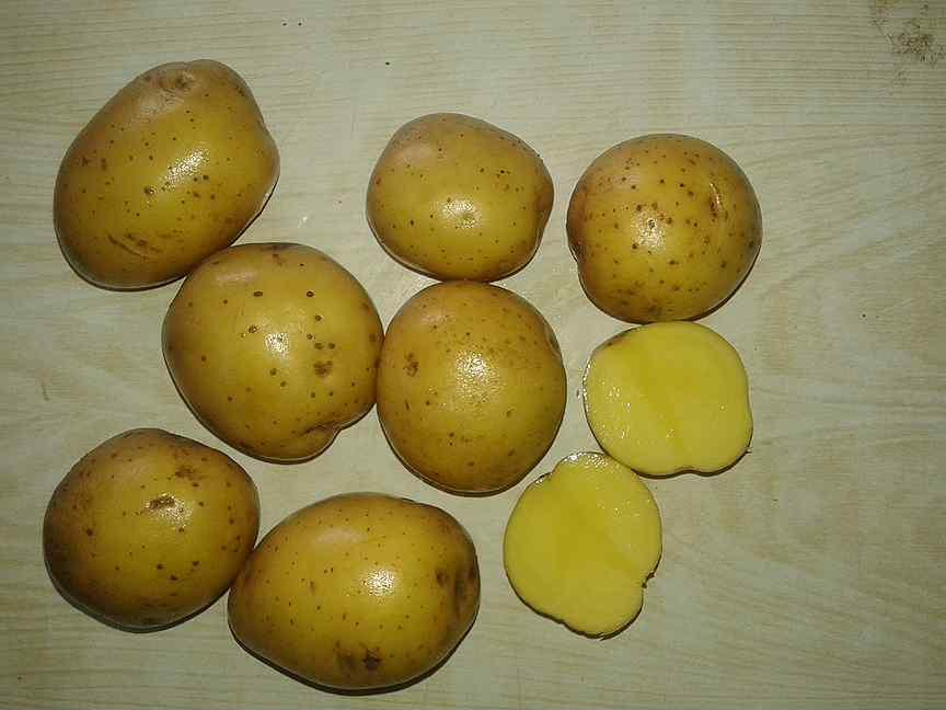 Картофель коломбо: описание, характеристики, фото