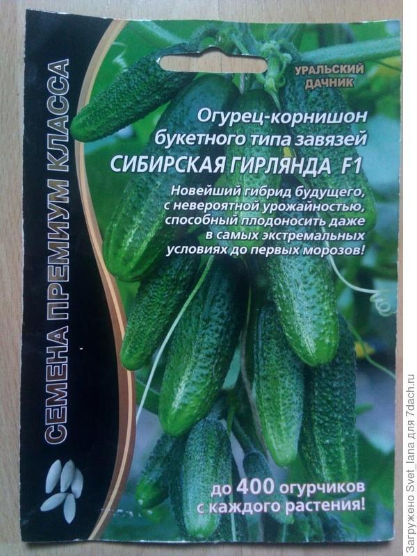 Рекомендации по выращиванию гибрида огурцов «моравский корнишон f1»