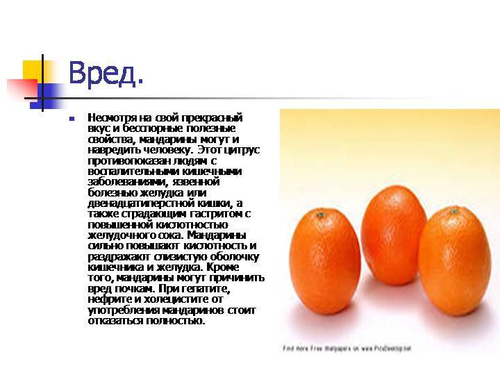 Мандарин: польза и вред для здоровья организма человека - globalsib