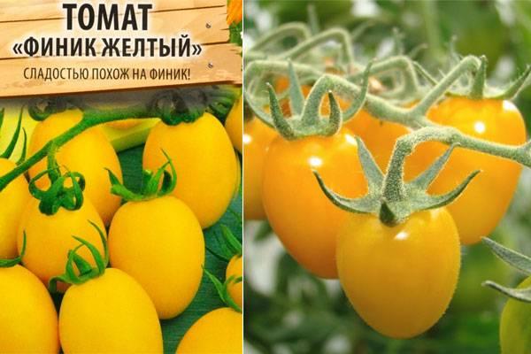 Обожаемый детьми и взрослыми яркий тепличный гибрид с фруктовым привкусом — томат «финик желтый»