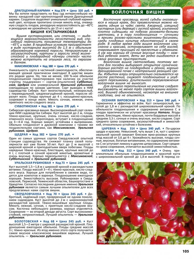 Сорта вишни для выращивания в средней полосе россии: самоплодные, сладкие, кустовые, низкорослые и карликовые