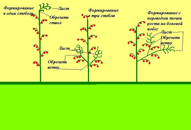 Пасынкование огурцов в теплице и открытом грунте: пошаговые инструкции и схемы формировки