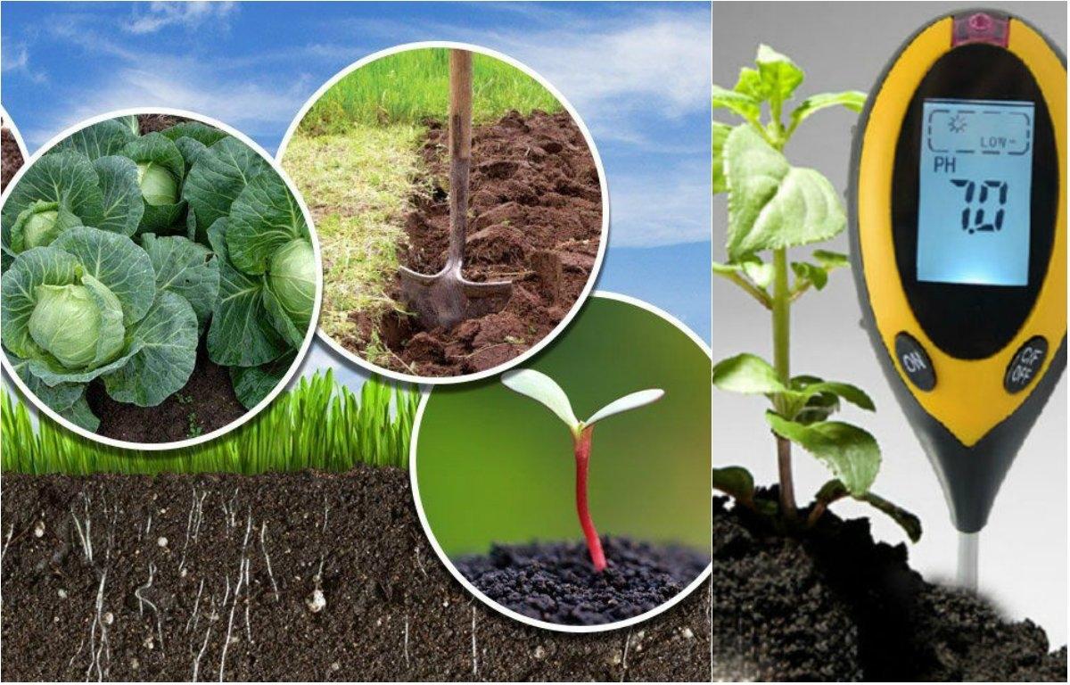 Грунт для цитрусовых: как выбрать нужную землю