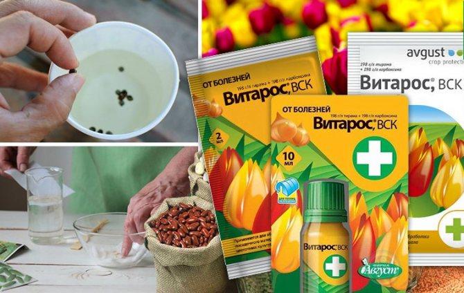 Фунгициды для орхидей: список простых и системных препаратов