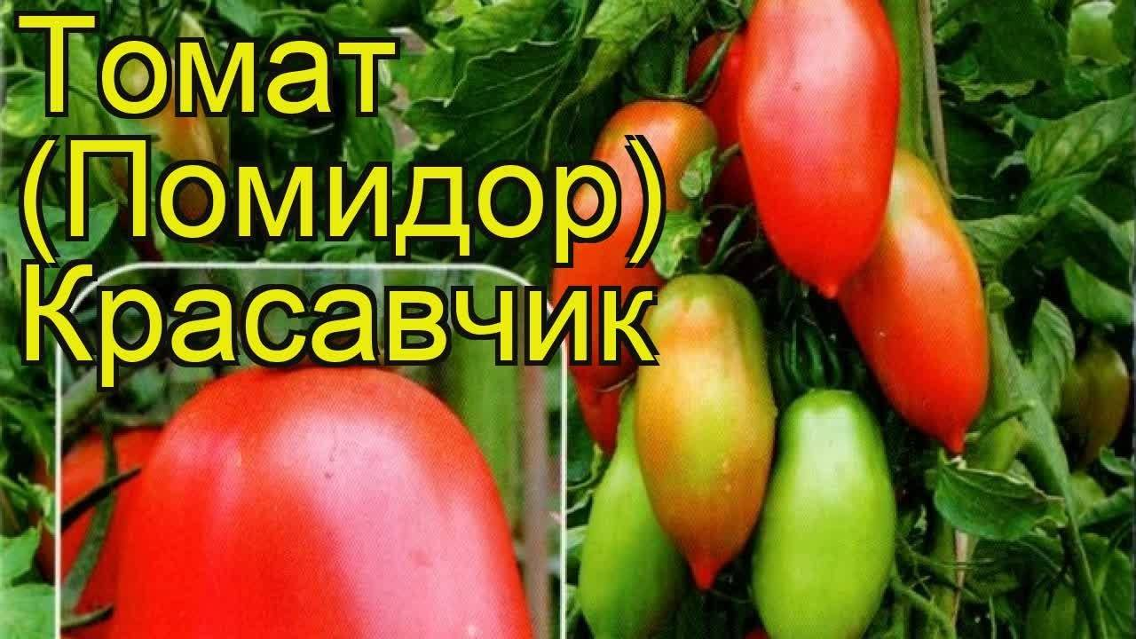 Томат краснобай: описание, отзывы, фото, характеристика | tomatland.ru