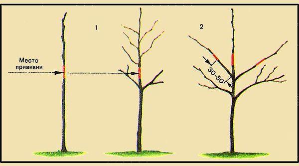 Когда и как правильно посадить саженец груши осенью и весной