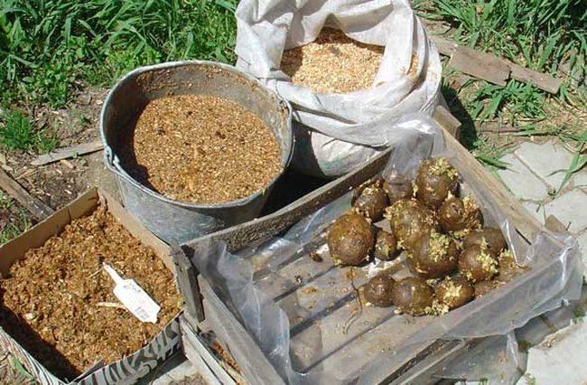 Проращивание картофеля перед посадкой: сроки и температура   народные знания от кравченко анатолия