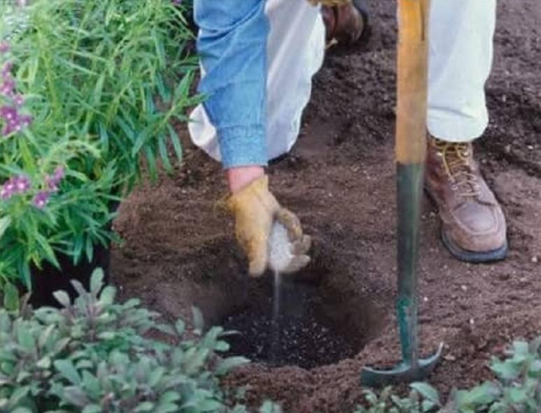 Органические удобрения из костной муки — после применения этого удобрения урожай вырос в 2 раза!