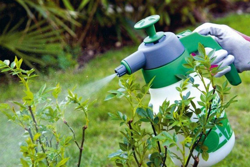 Примененние биофунгицидов вместо химических фунгицидов и другие способы защиты растений в органическом земледелии - агроэкомиссия - цифровая платформа знаний