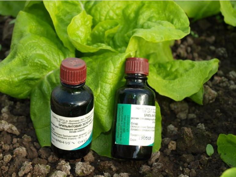 Обработка огурцов сывороткой и йодом: подкормка, опрыскивание в открытом грунте, рецепты с пропорциями для полива