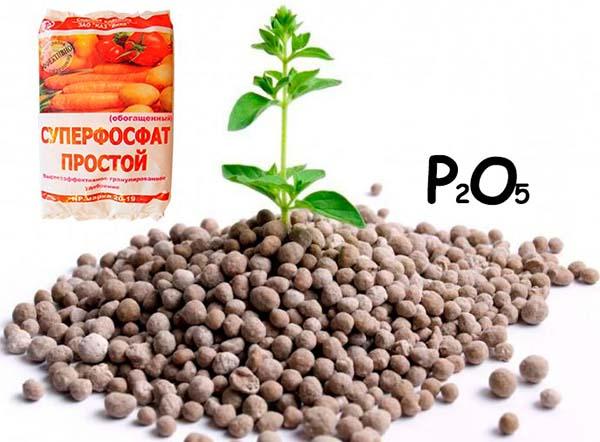 Что такое фосфорные удобрения и как их использовать в саду и в цветнике на supersadovnik.ru
