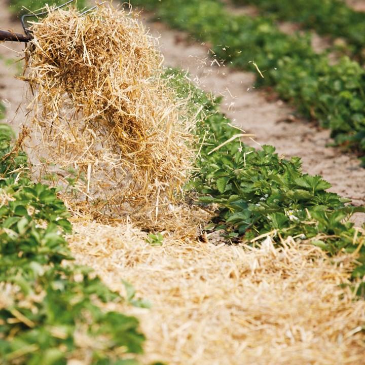 Мульчирование – способ повысить урожайность и избавиться от растительных остатков