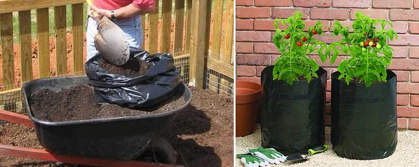 Уход за помидорами в теплице от посадки до урожая, подкормка, пасынкование, прищипывание фото