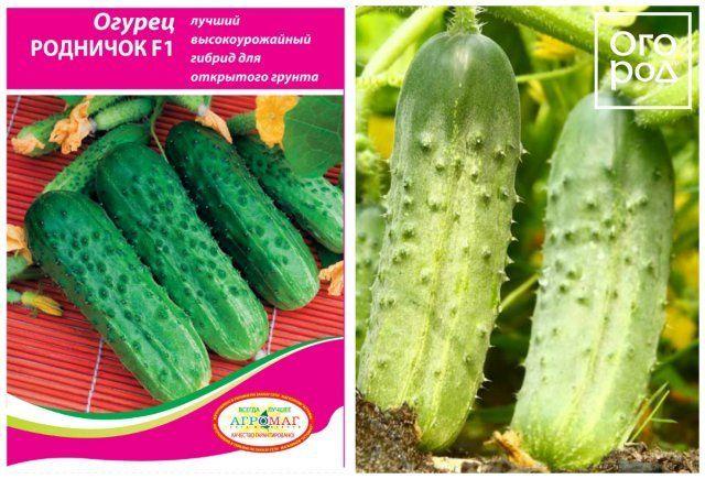 Огурец директор f1: характеристика и описание гибрида, выращивание и уход