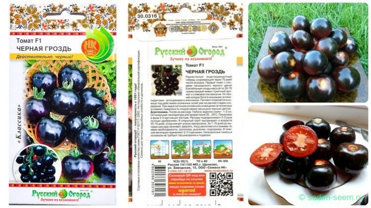 Томат синяя гроздь: характеристика и описание сорта, урожайность с фото