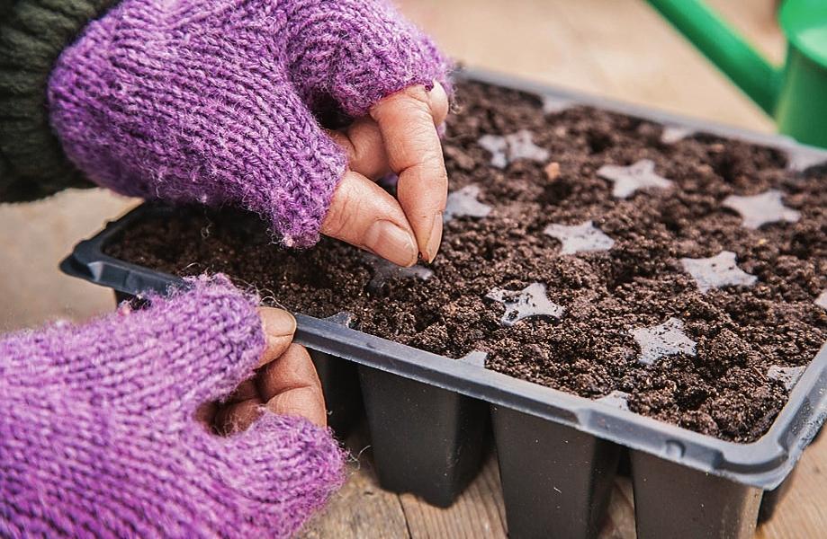 Выращивание лука-порея дома: посадка, уход, сбор и хранение