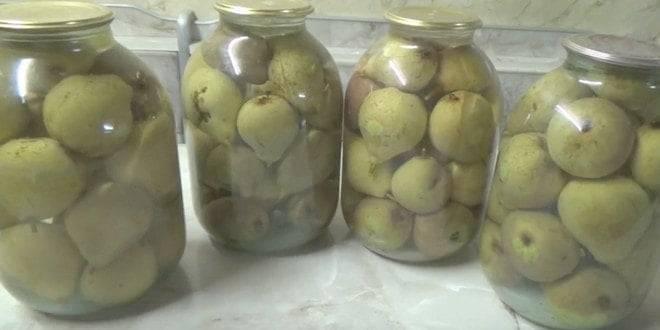 Маринованные груши на зиму – 5 оригинальных рецептов и видео