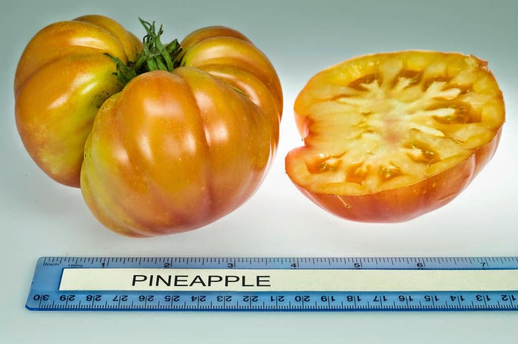 Необычный и вкусный томат ананас (pineapple): как вырастить хороший урожай и ухаживать за ним