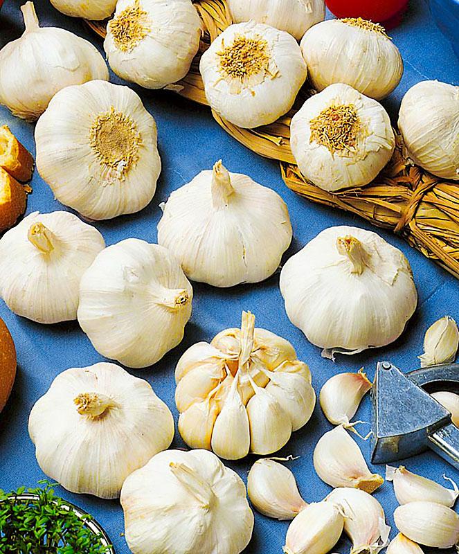 Китайский чеснок: описание, особенности выращивания и ухода