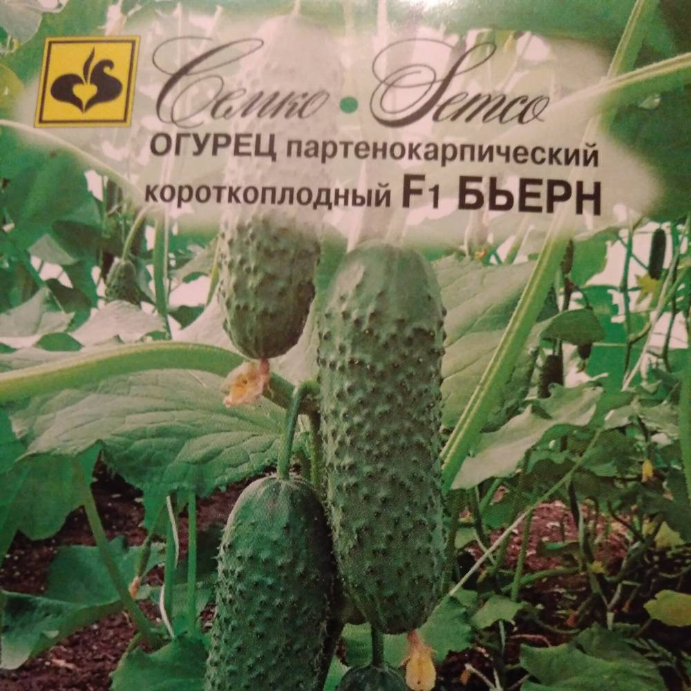 Огурцы бьерн f1: описание сорта и отзывы, устойчивость к болезням и урожайность, фотографии и видео