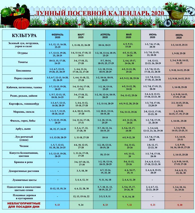 Когда лучше сажать огурцы в открытый грунт в 2021 году, благоприятные дни по лунному календарю
