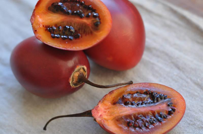 Что за фрукт тамарилло, как его кушать и выращивание томатного дерева