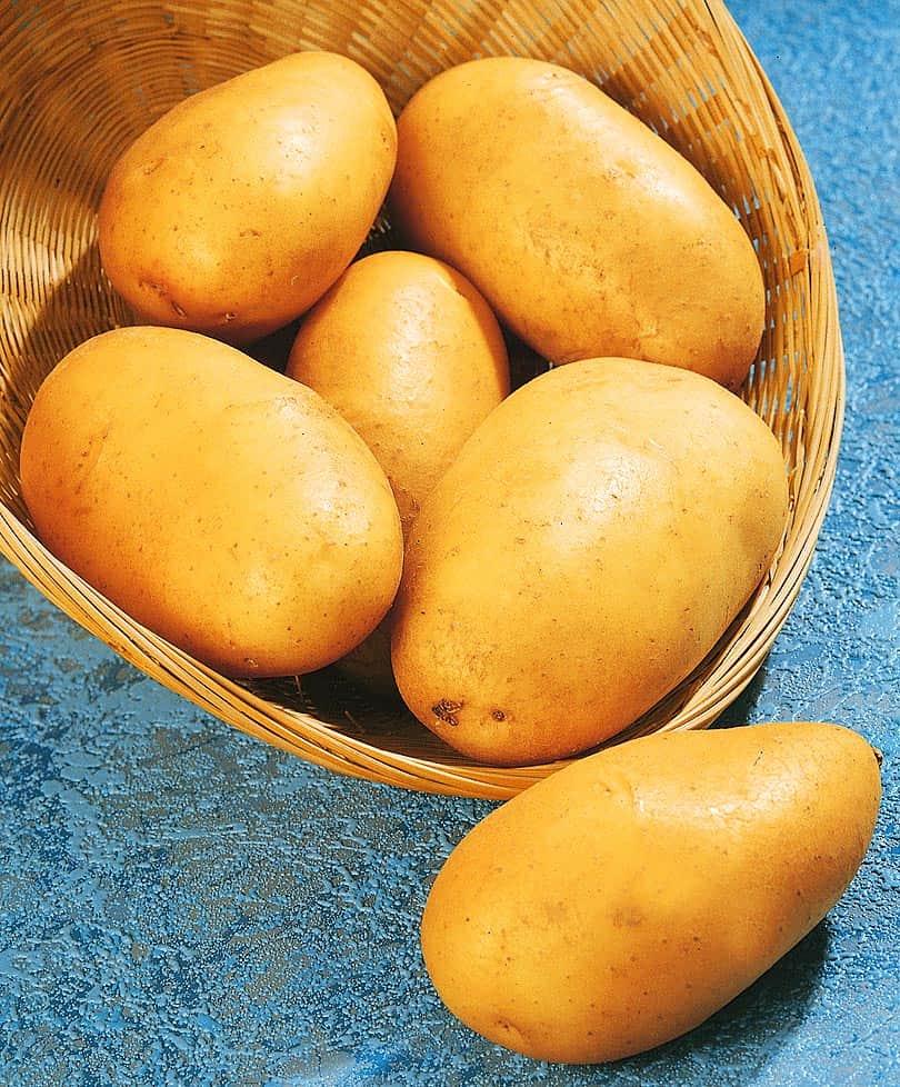 Описание и характеристики картофеля сорта Зорачка, посадка и уход