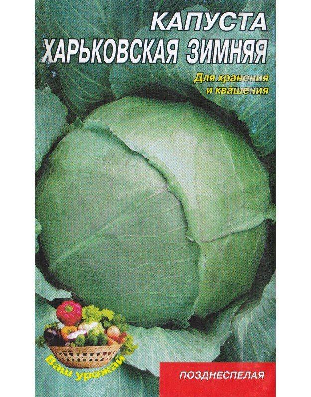 Капуста харьковская – описание сорта, фото, отзывы