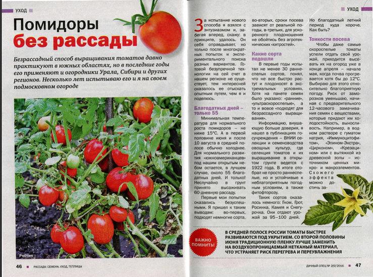 Выращивание томата безрассадным способом в открытый грунт, видео и фото