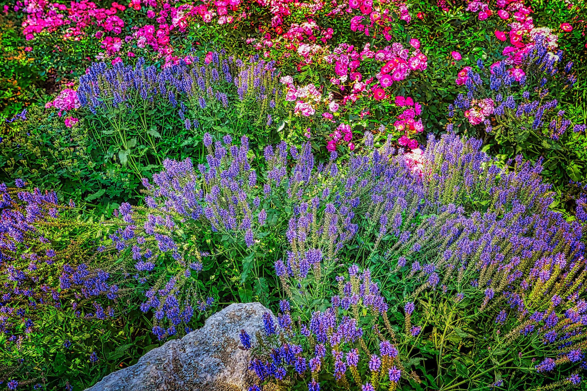 Правильное цветочное соседство. сочетание с умом