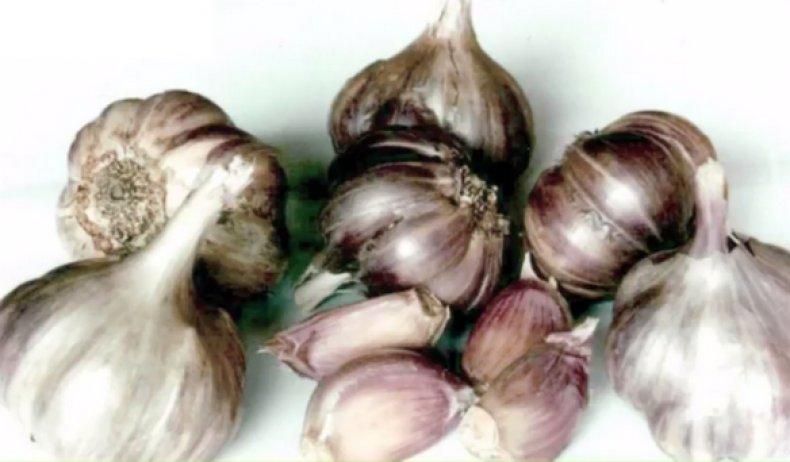 Озимый чеснок грибовский: описание сорта, отзывы садоводов, фото