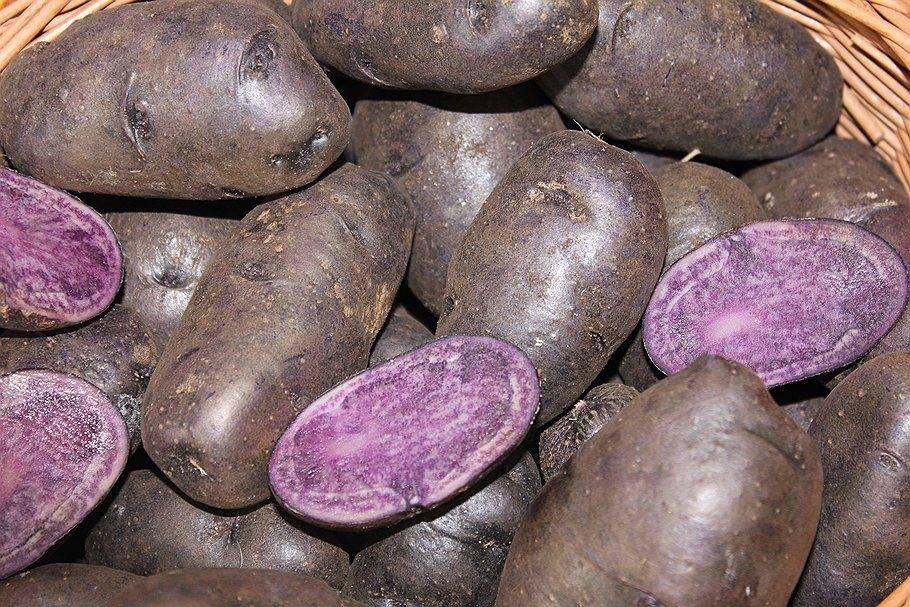 Желтые сорта картофеля с желтой мякотью и кожурой: описание и фото