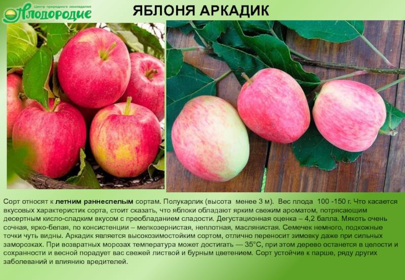 Описание яблони сорта Аркадик, правила посадки и ухода