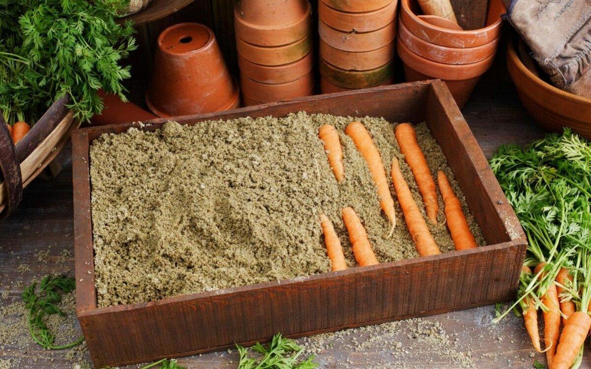 Как хранить мытую морковь, в домашних условиях на зиму, можно ли не мыть, чтобы положить в погреб, а также, какие сорта долго остаются в хорошем состоянии? selo.guru — интернет портал о сельском хозяйстве