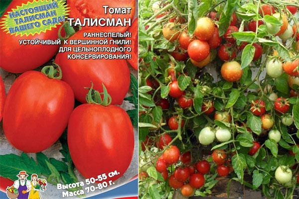 Витаминные и свежие урожаи круглое лето — томат китайский ранний: характеристика и описание сорта