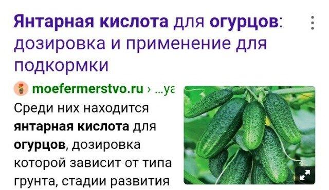 Дозировка и применение янтарной кислоты для подкормки огурцов