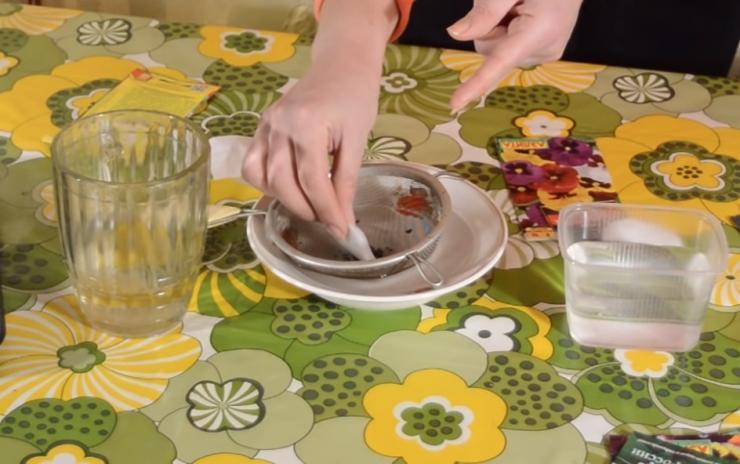 Как поливать рассаду помидоров - полив томатов, основные правила и сроки полива в домашних условиях на подоконнике | спутниковые технологии