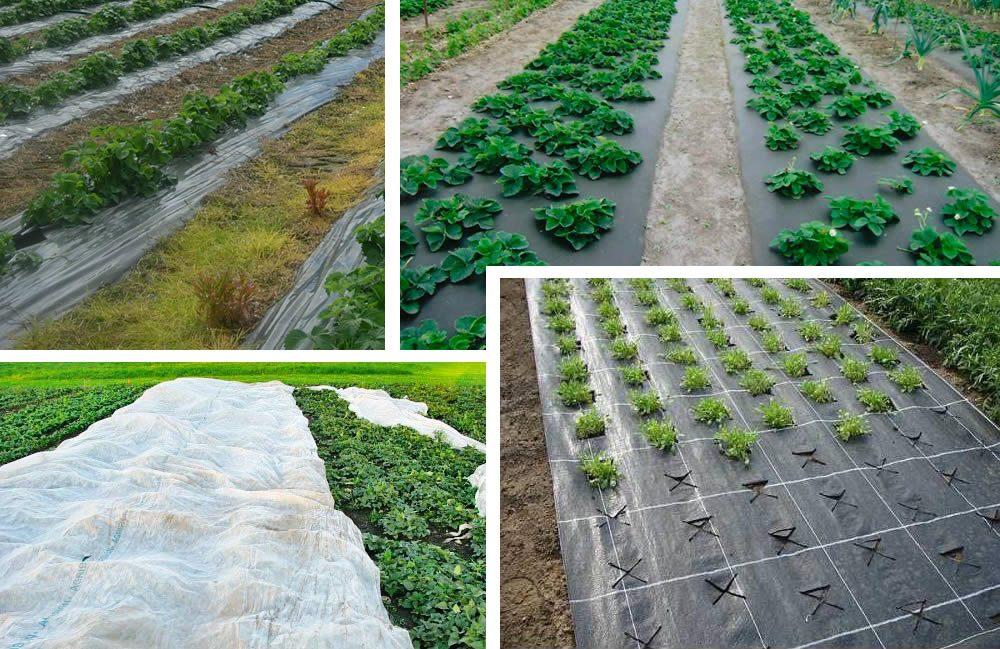 Спанбонд: как сохранить урожай на грядках