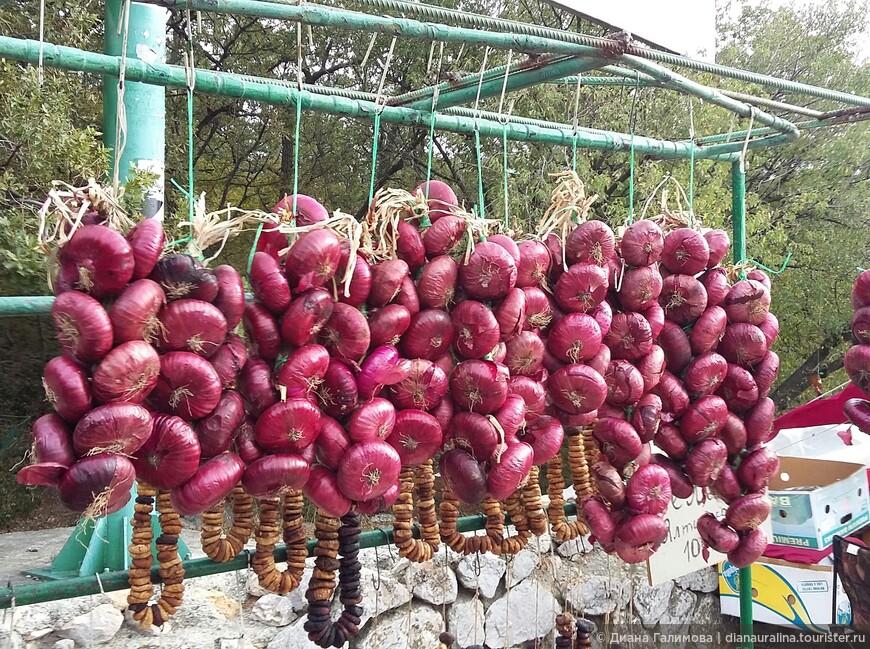 Крымский (ялтинский) лук: выращивание в средней полосе с фото