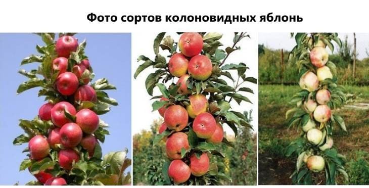Не цветёт и не плодоносит яблоня? основные причины и как это исправить!