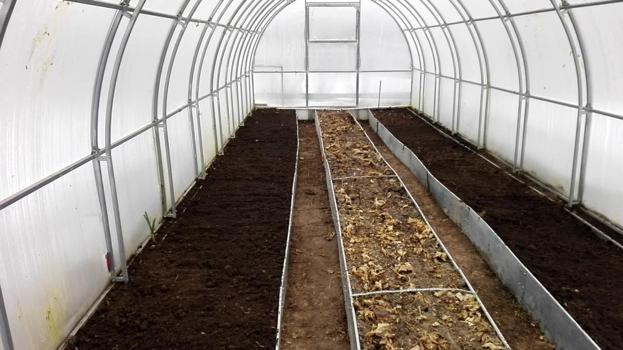 Чем обработать землю от фитофторы перед посадкой весной, как обеззаразить и вылечить грунт, чтобы избавиться от недуга, чем полить почву в теплице после томатов?