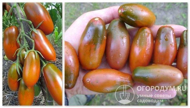 Чёрные помидоры: описание и характеристика сортов