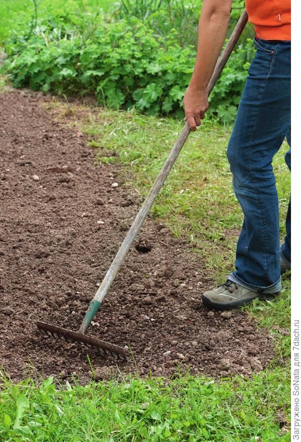 Перекапывать ли огород осенью: надо ли это делать, время проведения и особенности