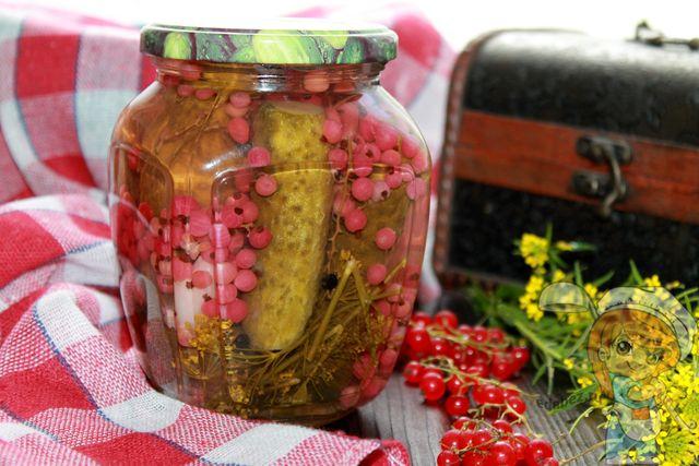 Огурцы с красной смородиной на зиму: рецепты без уксуса и без стерилизации, маринованные варианты и советы для приготовления вкусных заготовок