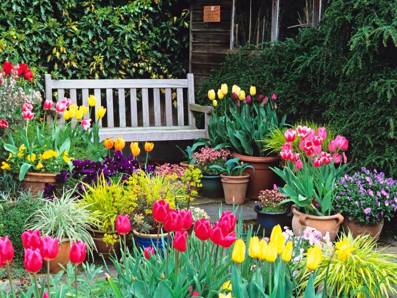 Схемы посадки цветника с тюльпанами (фото) или как красиво посадить тюльпаны?