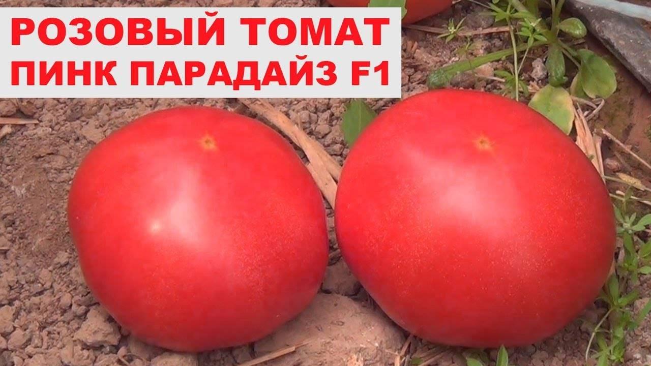 Томат пинк райз f1 — описание и характеристика сорта