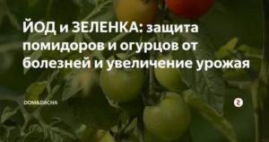 Зеленка и йод для огурцов: подкормка, обработка
