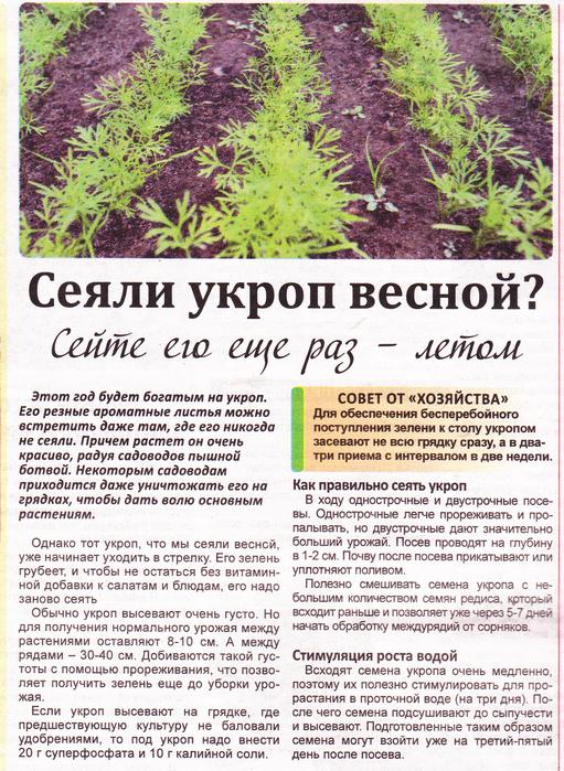 Щавель - посадка и уход в открытом грунте, простые правила выращивания