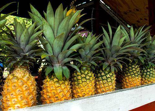 Как в магазине выбрать спелый ананас и не ошибиться